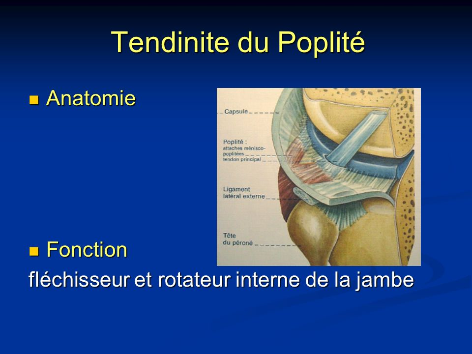 Tendinite du Poplité Anatomie Fonction