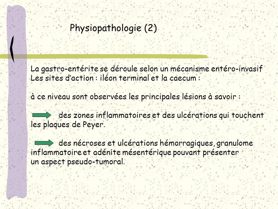 Physiopathologie (2)La gastro-entérite se déroule selon un mécanisme entéro-invasif. Les sites d'action : iléon terminal et la caecum :