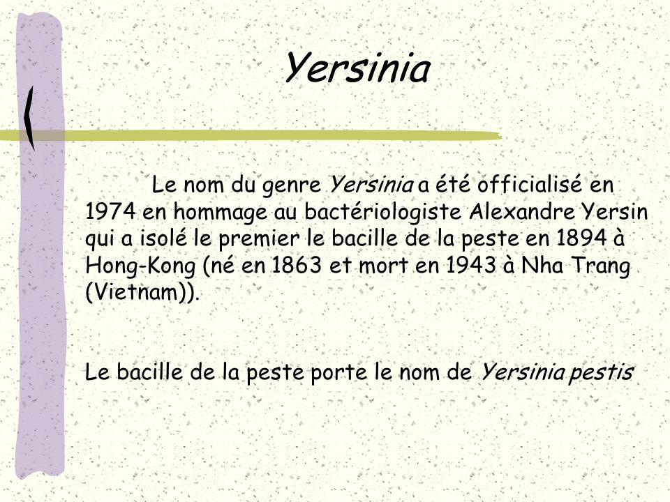 Yersinia Le nom du genre Yersinia a été officialisé en 1974 en hommage au bactériologiste Alexandre Yersin.