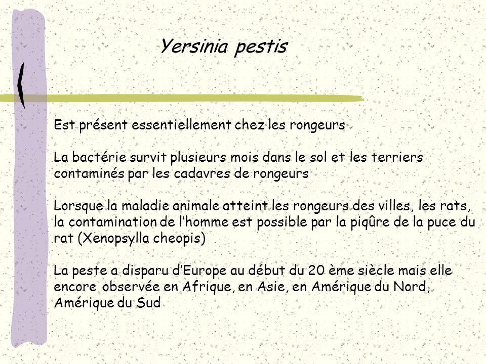 Yersinia pestis Est présent essentiellement chez les rongeurs