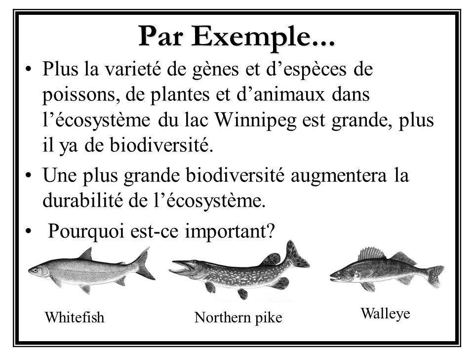 Par Exemple...
