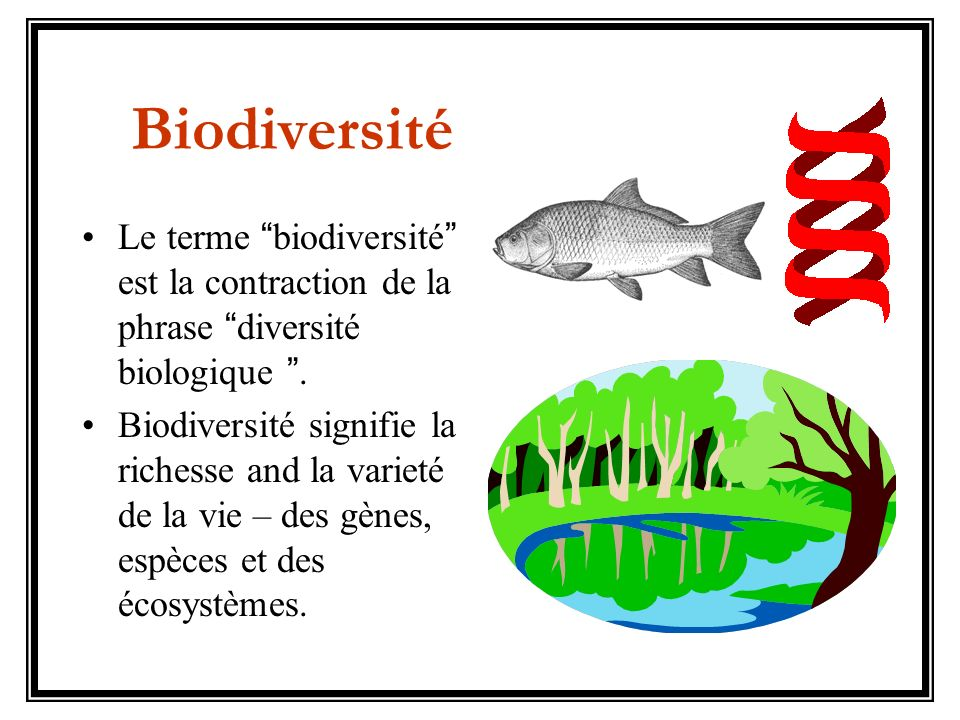 Biodiversité Le terme biodiversité est la contraction de la phrase diversité biologique .