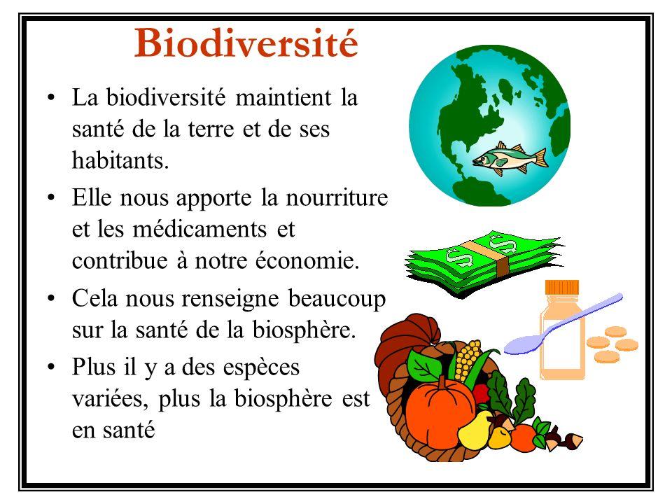 Biodiversité La biodiversité maintient la santé de la terre et de ses habitants.