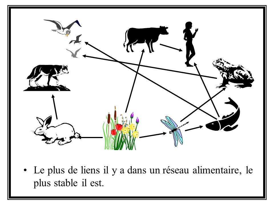 Le plus de liens il y a dans un réseau alimentaire, le plus stable il est.