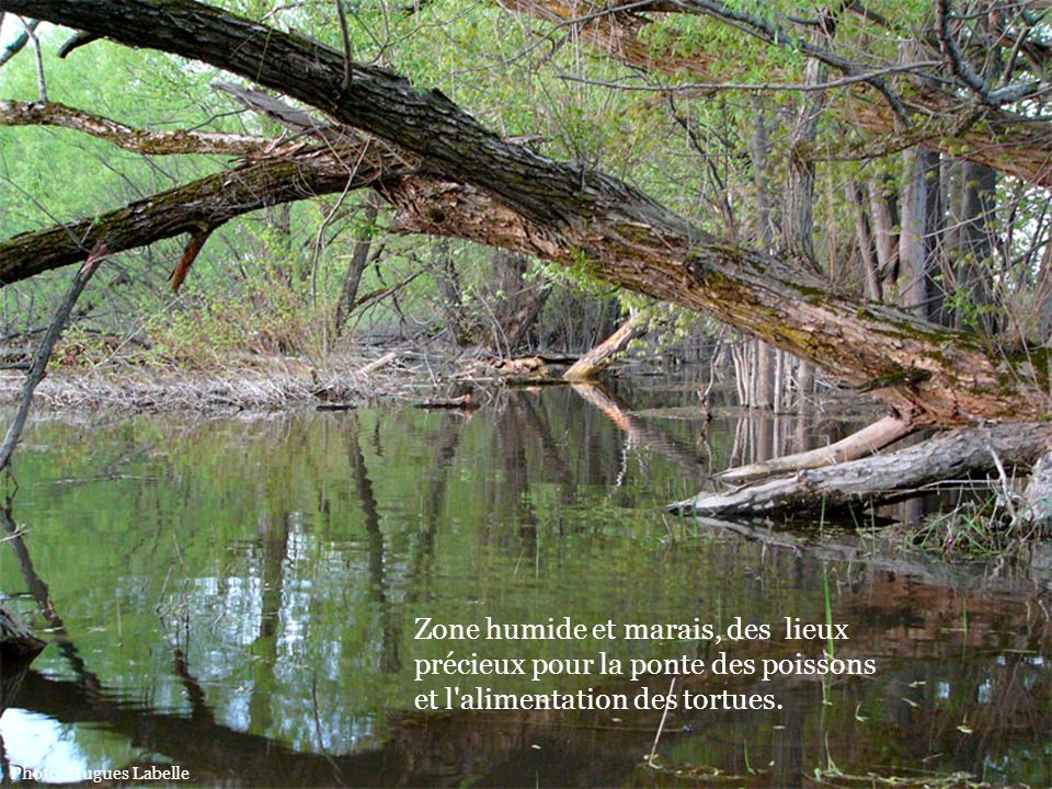 Zone humide et marais, des lieux précieux pour la ponte des poissons