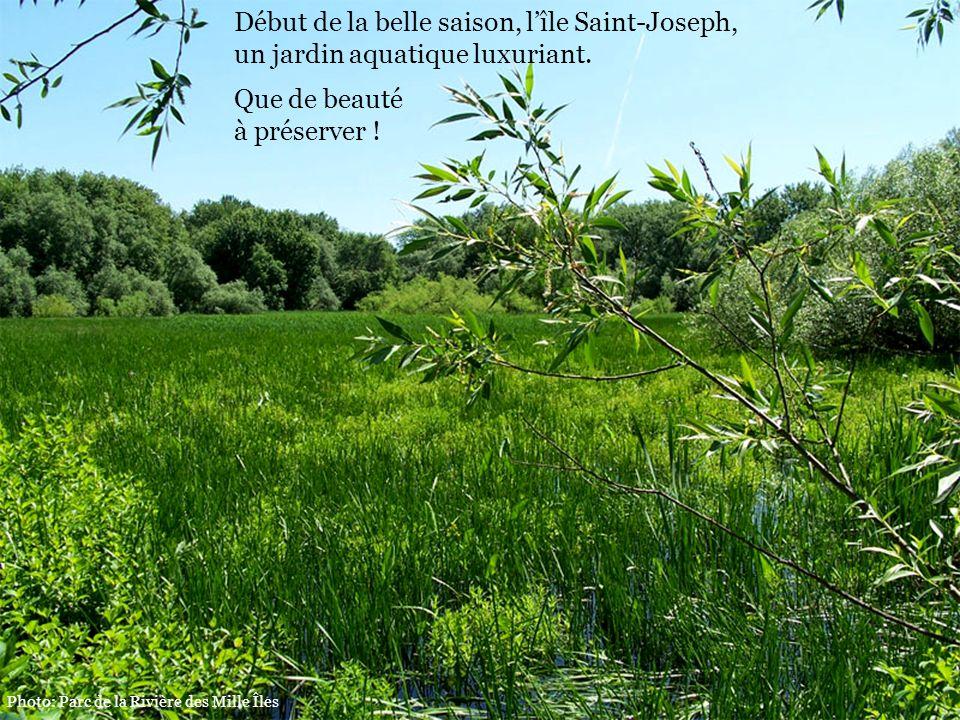 Début de la belle saison, l'île Saint-Joseph,