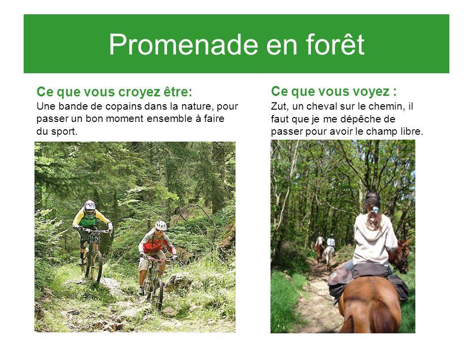 Promenade en forêt Ce que vous croyez être: Une bande de copains dans la nature, pour passer un bon moment ensemble à faire du sport.