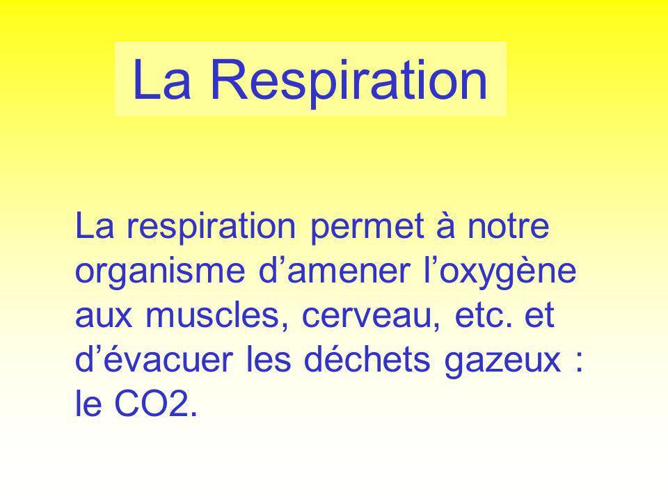 La Respiration La respiration permet à notre organisme d'amener l'oxygène aux muscles, cerveau, etc.