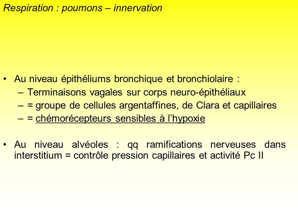 Respiration : poumons – innervation