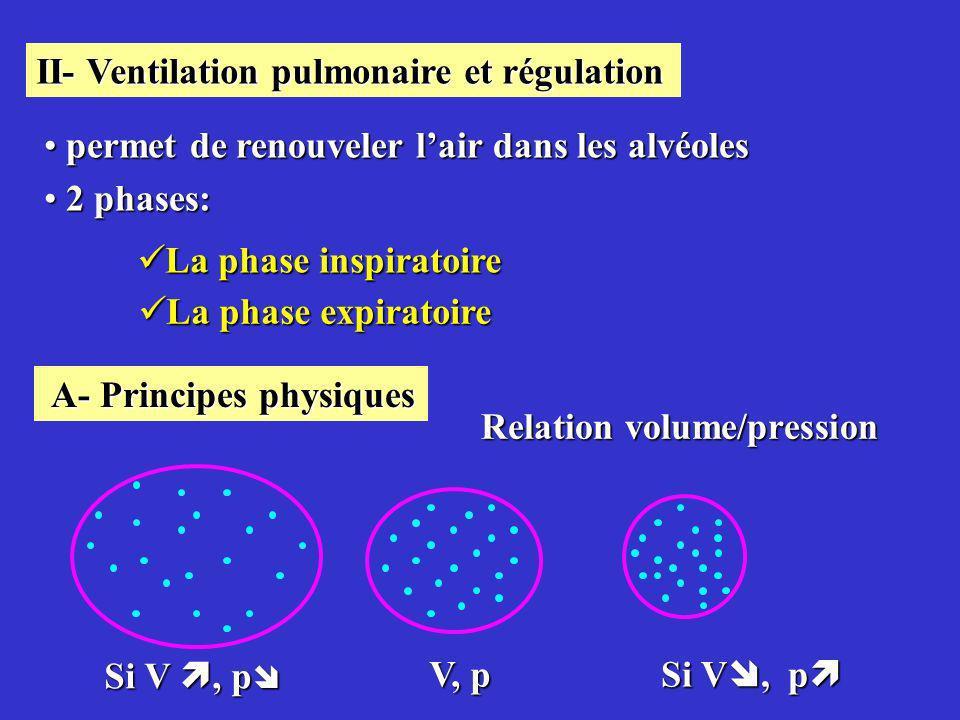 II- Ventilation pulmonaire et régulation