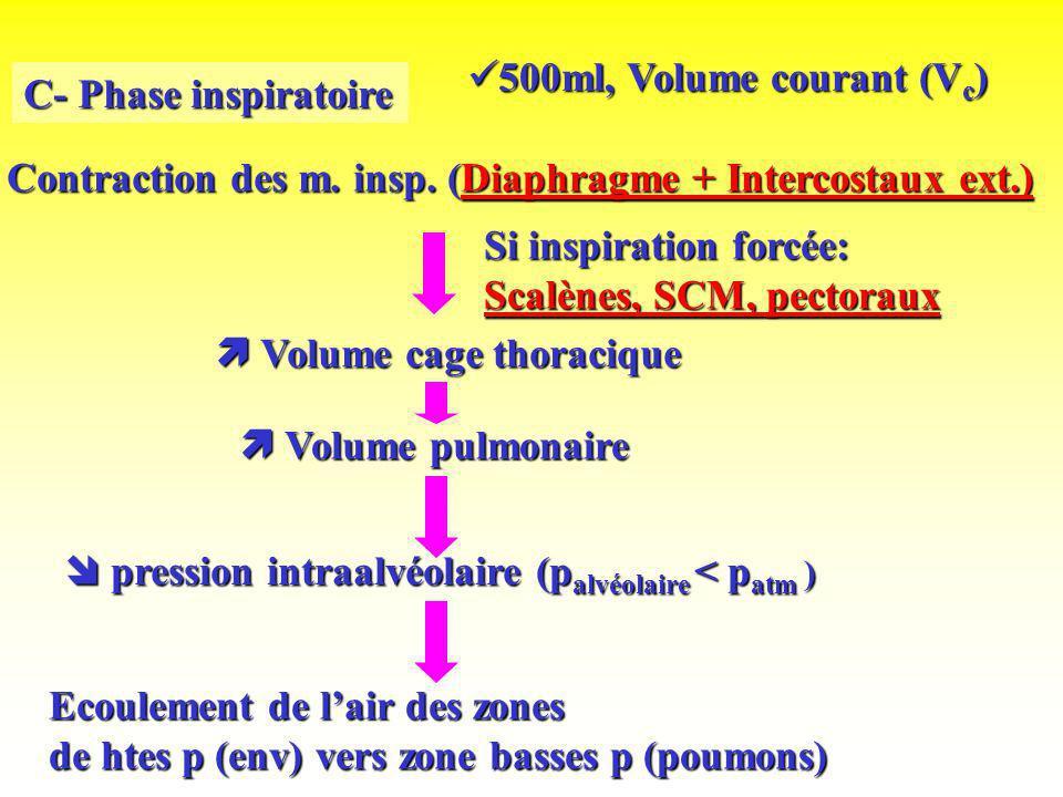 500ml, Volume courant (Vc)C- Phase inspiratoire. Contraction des m. insp. (Diaphragme + Intercostaux ext.)