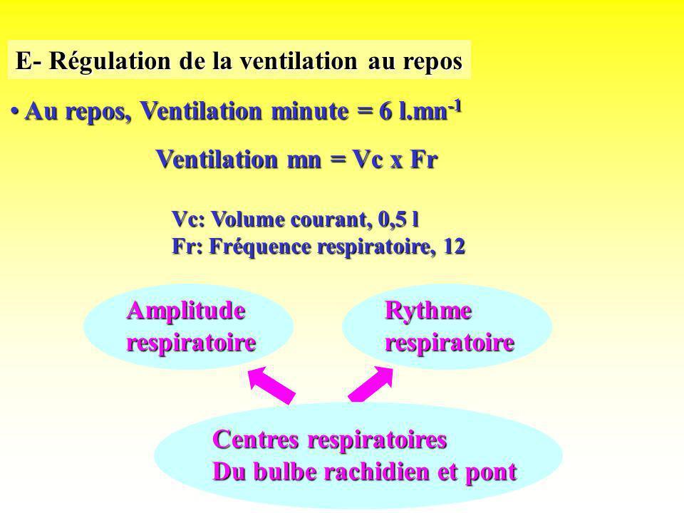 E- Régulation de la ventilation au repos