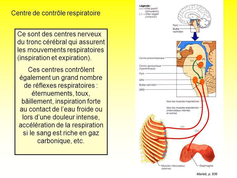 Centre de contrôle respiratoire