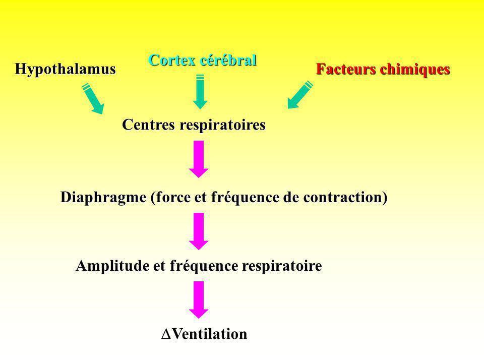 Cortex cérébralHypothalamus. Facteurs chimiques. Centres respiratoires. Diaphragme (force et fréquence de contraction)