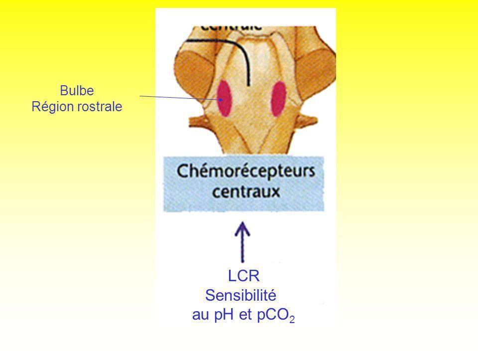 Bulbe Région rostrale LCR Sensibilité au pH et pCO2