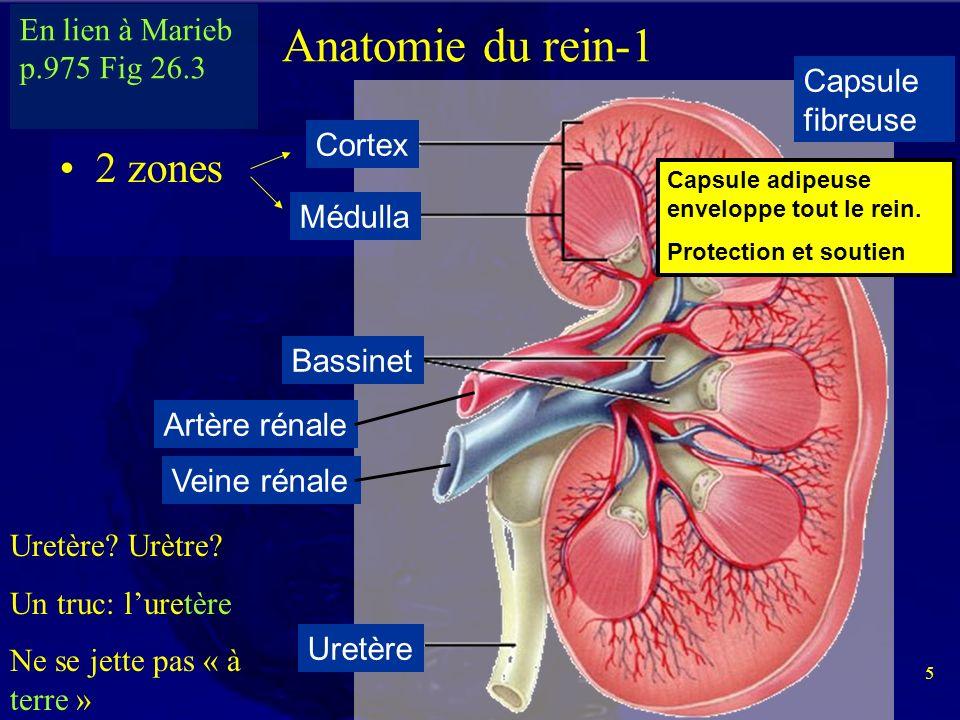 Großzügig Menschliche Anatomie Und Physiologie Marieb Und Hoehn 9 ...