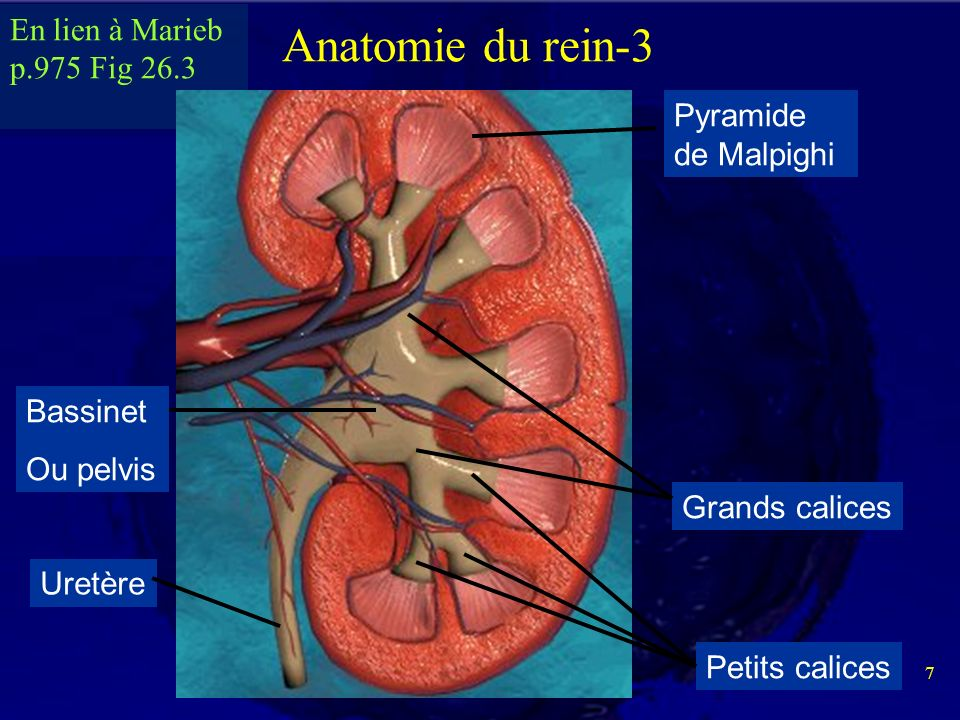 Beste Menschliche Anatomie Und Physiologie Marieb Hoehn Ideen ...