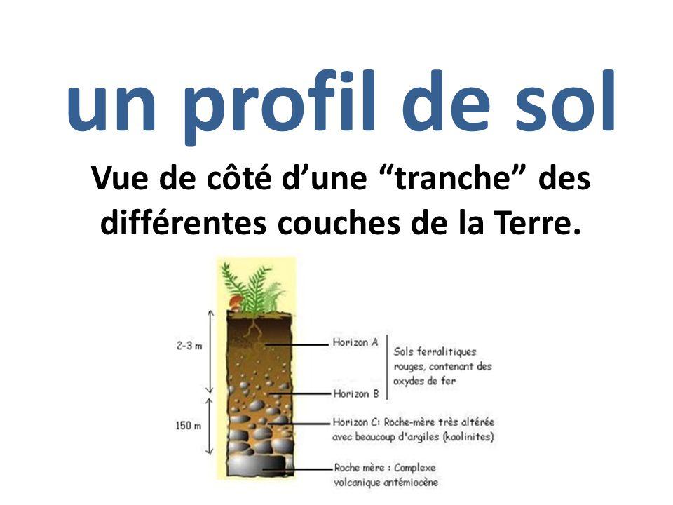 Les organismes plante vivante ou vie animale ppt video online t l charger - Differente couche de la terre ...