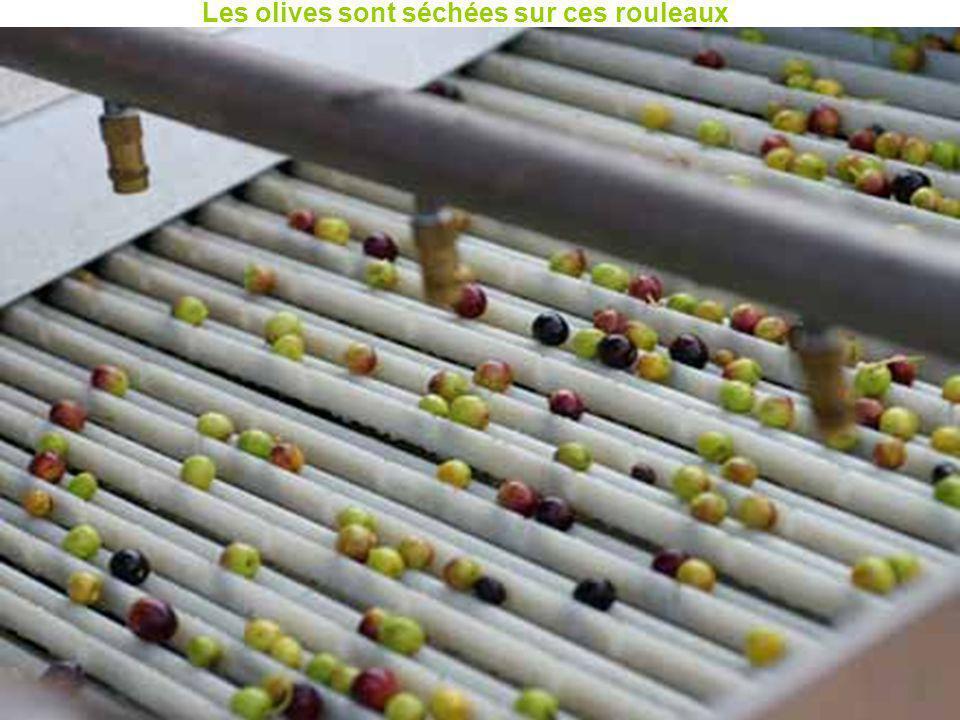 Les olives sont séchées sur ces rouleaux