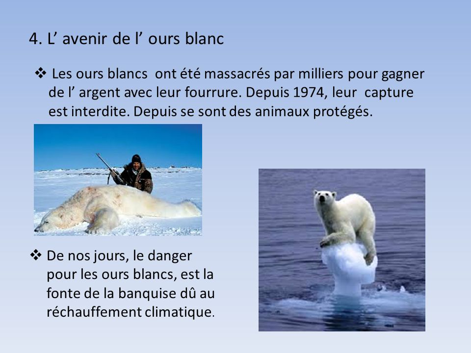 L ours blanc ppt video online t l charger - Photo ours blanc sur la banquise ...