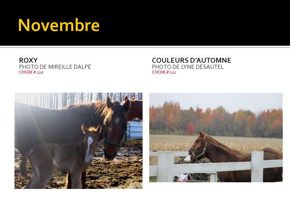 Novembre Roxy Couleurs d'automne Photo de Mireille Dalpé