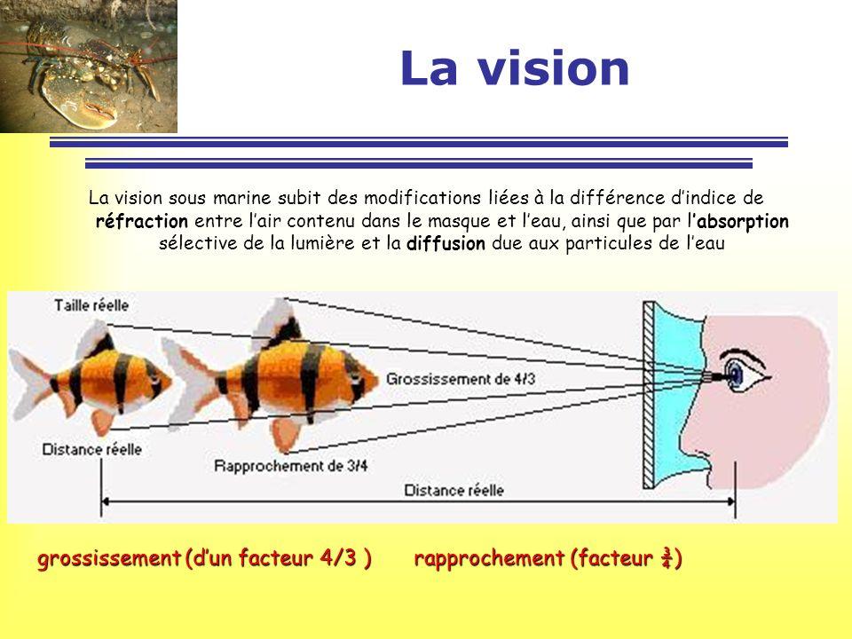 La vision grossissement (d'un facteur 4/3 ) rapprochement (facteur ¾)