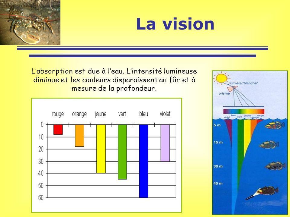 La vision L'absorption est due à l'eau.