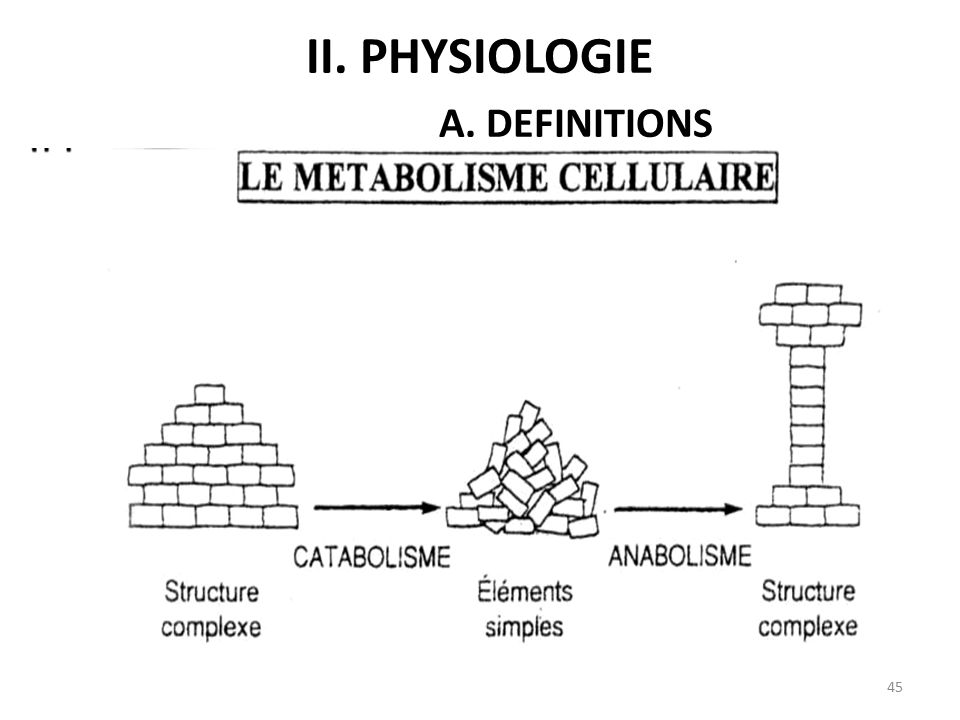 Ii. Physiologie A. DEFINITIONS