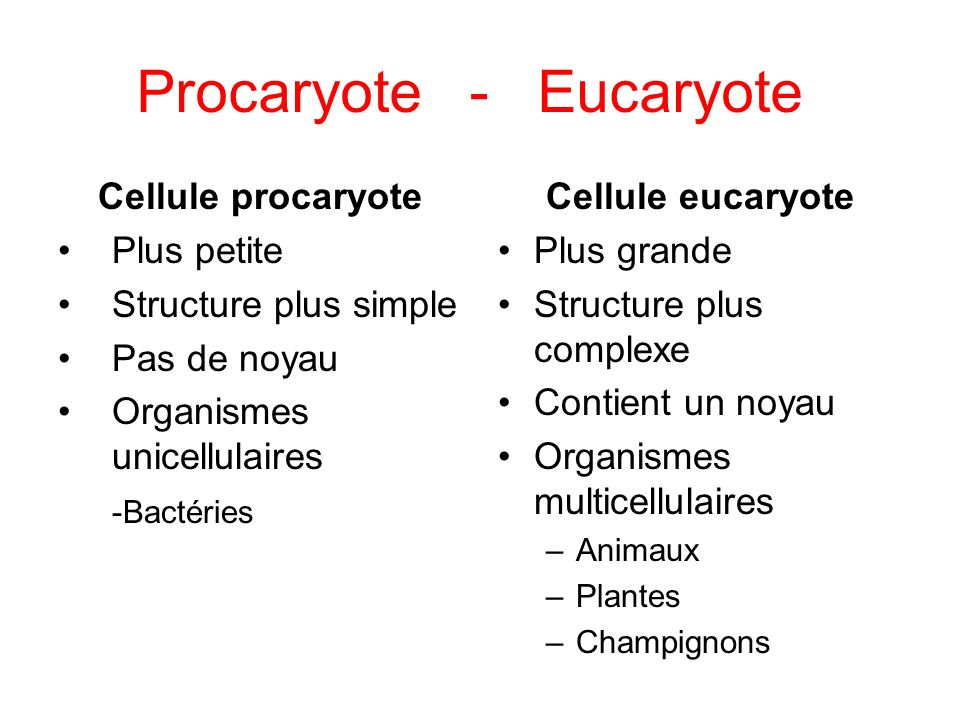 Procaryote - Eucaryote