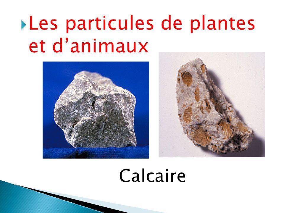 Les particules de plantes et d'animaux