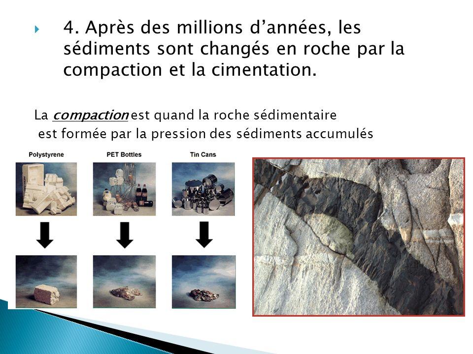 4. Après des millions d'années, les sédiments sont changés en roche par la compaction et la cimentation.