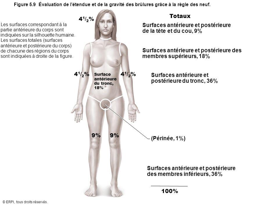 Surfaces antérieure et postérieure de la tête et du cou, 9%
