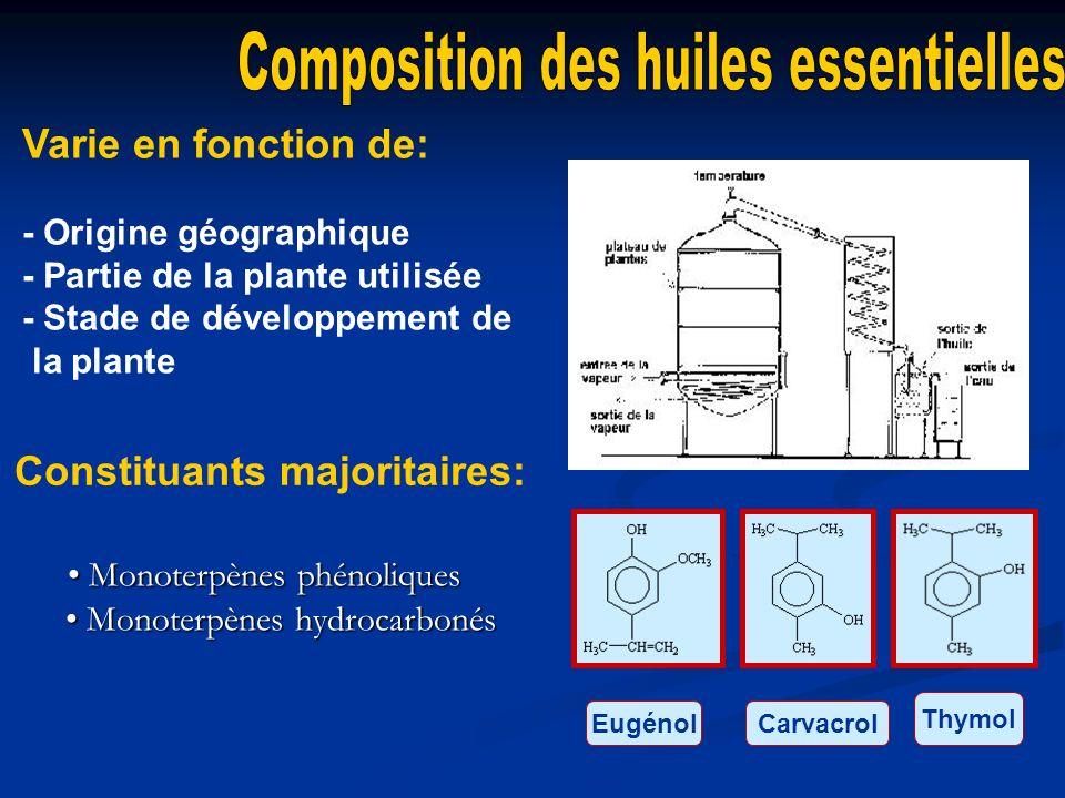 • Monoterpènes phénoliques • Monoterpènes hydrocarbonés