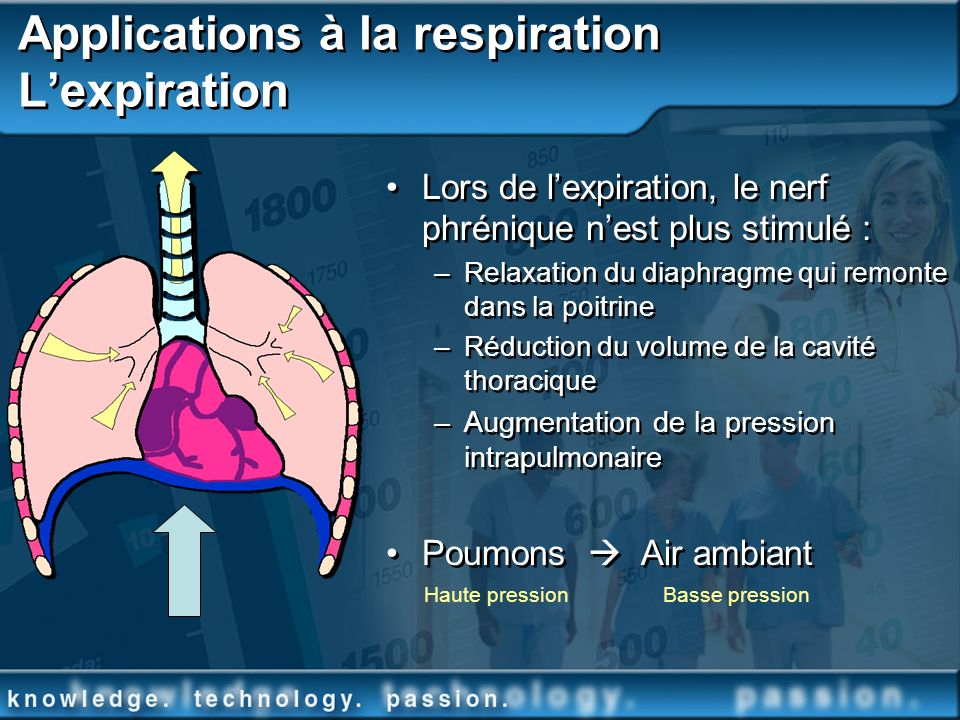 Applications à la respiration L'expiration