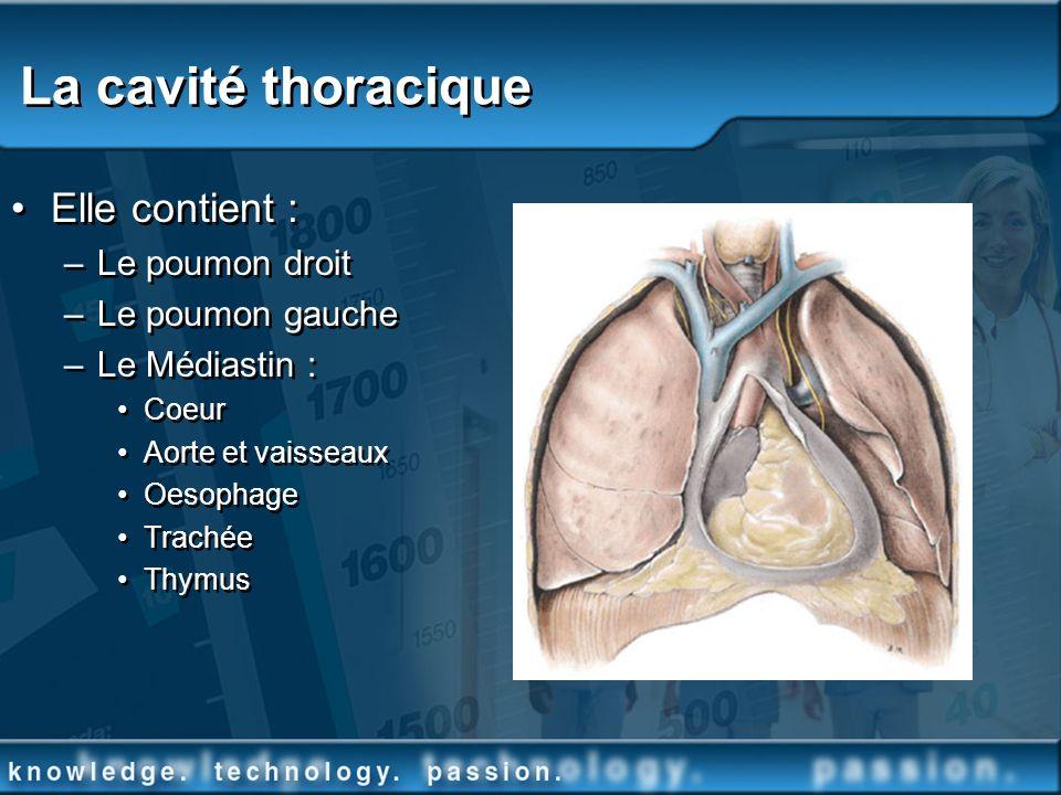La cavité thoracique Elle contient : Le poumon droit Le poumon gauche
