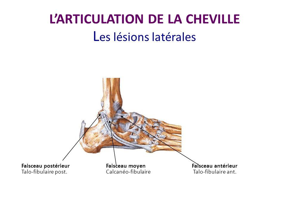 aspect continu du ligament talo fibulaire