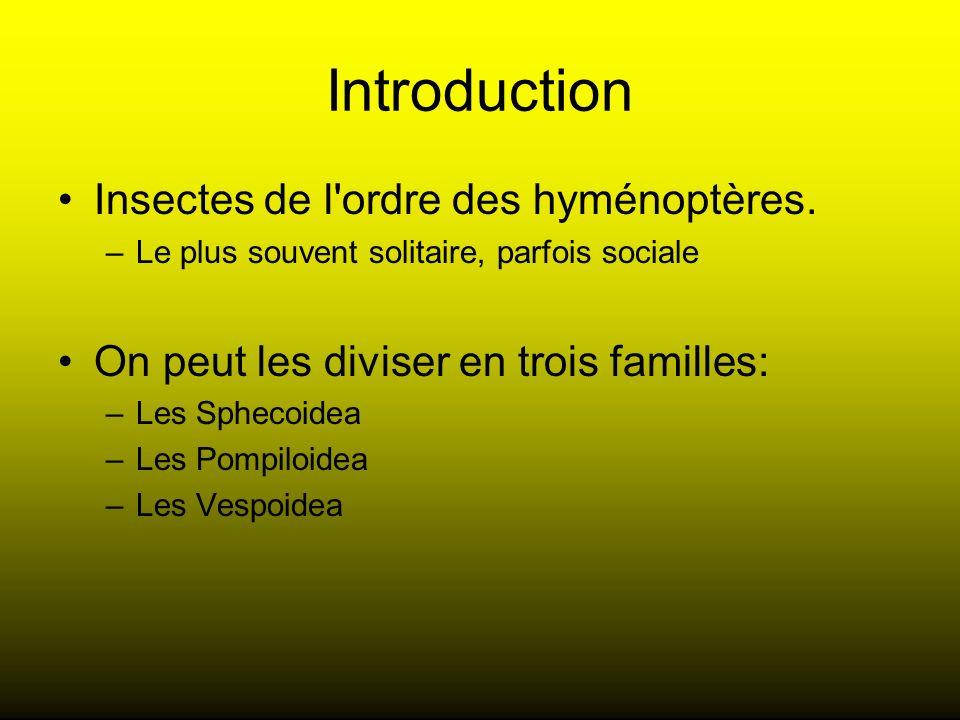Introduction Insectes de l ordre des hyménoptères.