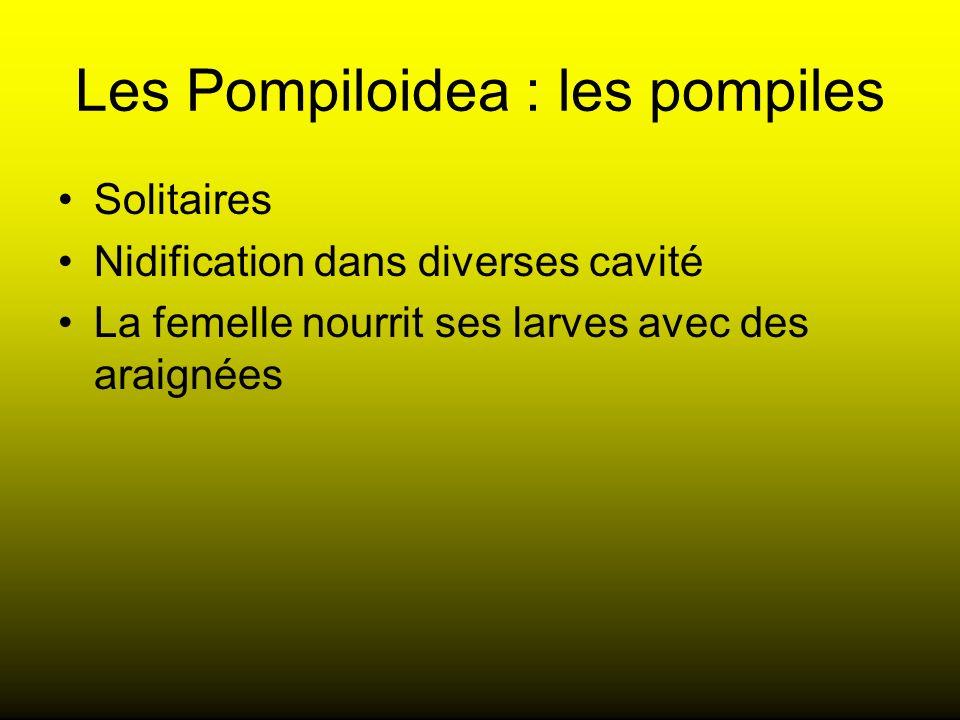 Les Pompiloidea : les pompiles