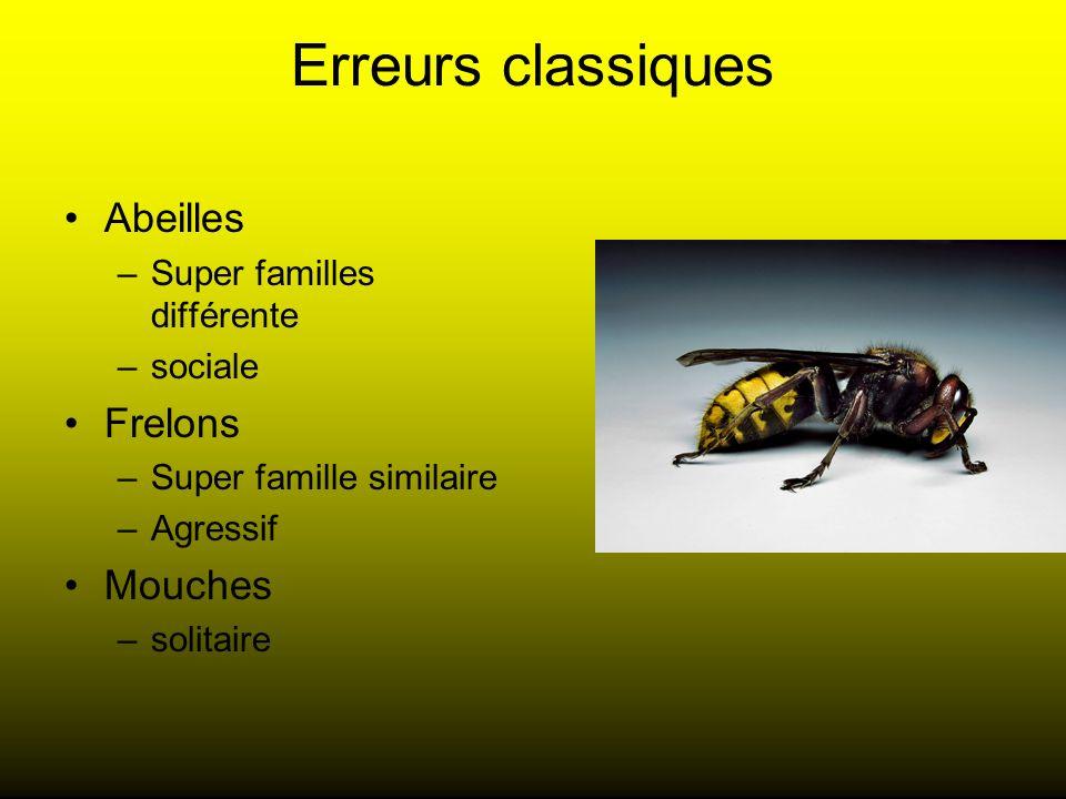 Erreurs classiques Abeilles Frelons Mouches Super familles différente