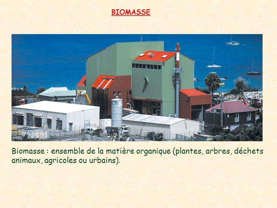 BIOMASSE Biomasse : ensemble de la matière organique (plantes, arbres, déchets animaux, agricoles ou urbains).