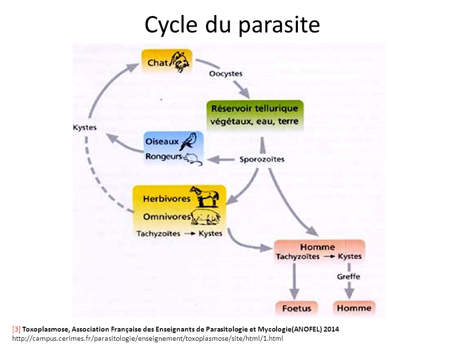 an introduction to the issue of a parasite Accidental water pollution  this occurs, like most diseases, in a cycle with a parasite and different hosts.