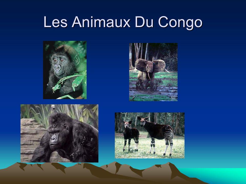 Les Animaux Du Congo