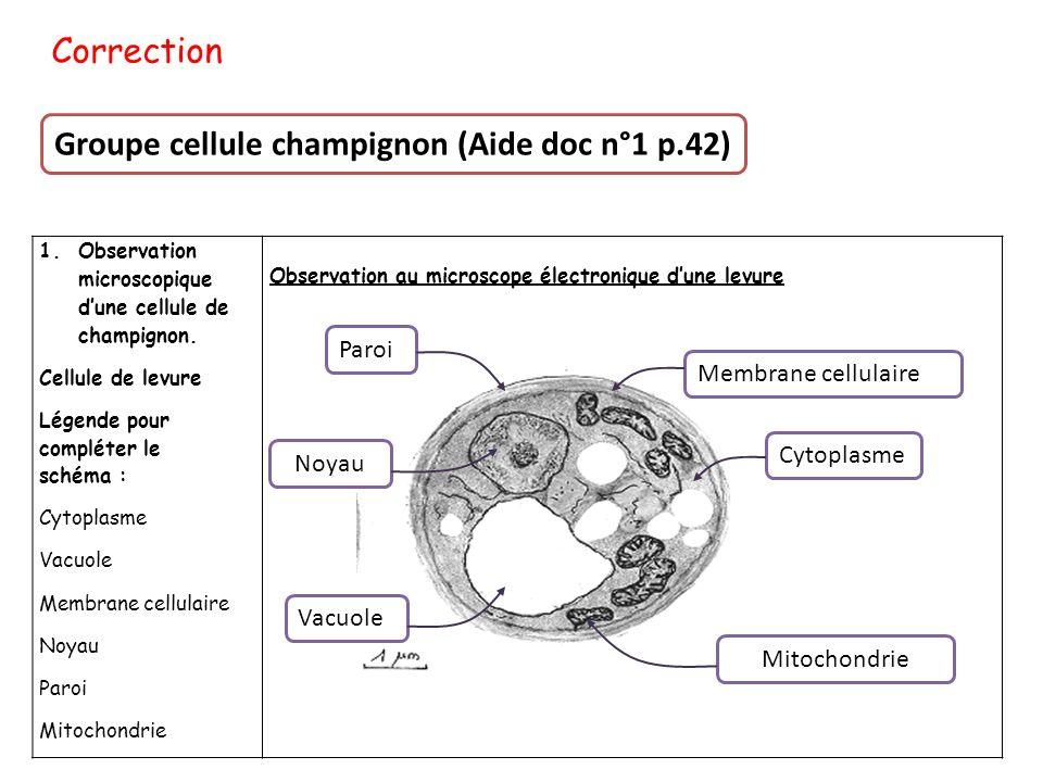 Groupe cellule champignon (Aide doc n°1 p.42)