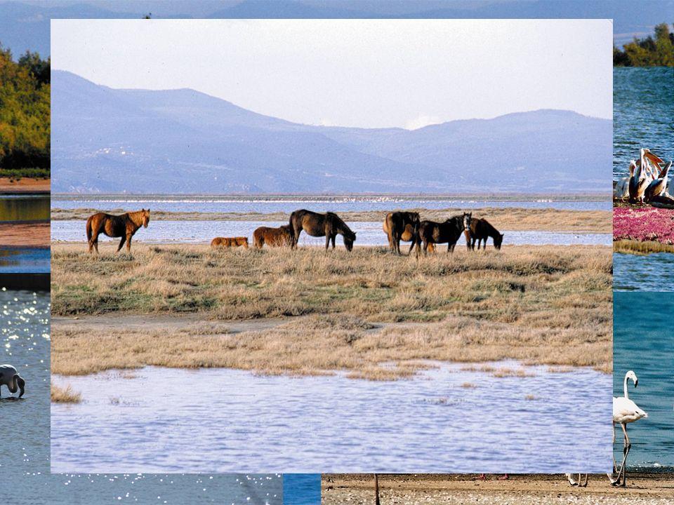 Un des biotopes les plus important d'Europe en raison de sa superficie et des 263 espèces d'oiseaux qui y nichent ,hivernent ou font escale.