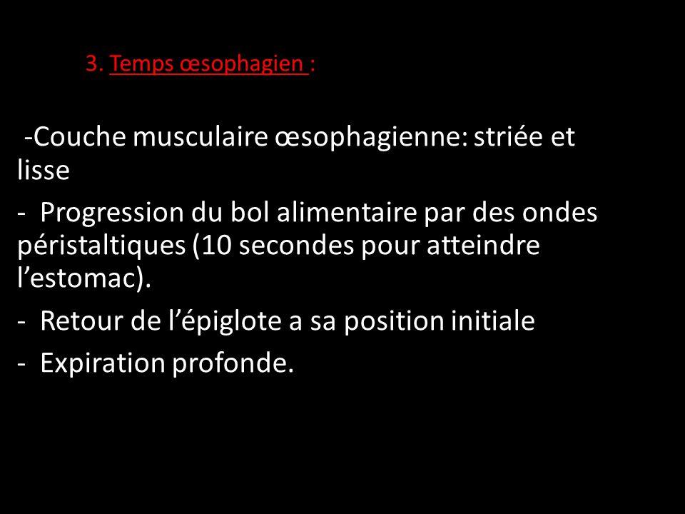 Physiologie digestive ppt video online t l charger - Retour de couche combien de temps ...