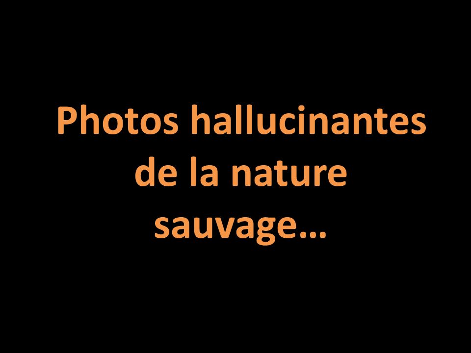 Photos hallucinantes de la nature sauvage…