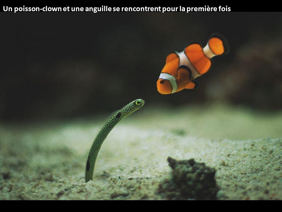 Un poisson-clown et une anguille se rencontrent pour la première fois