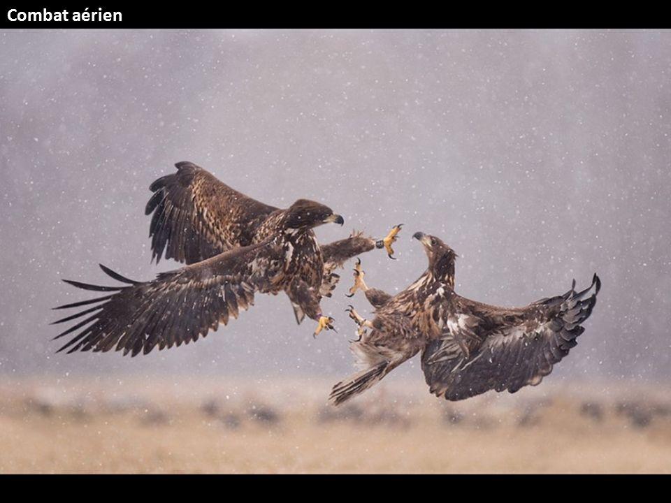 Combat aérien