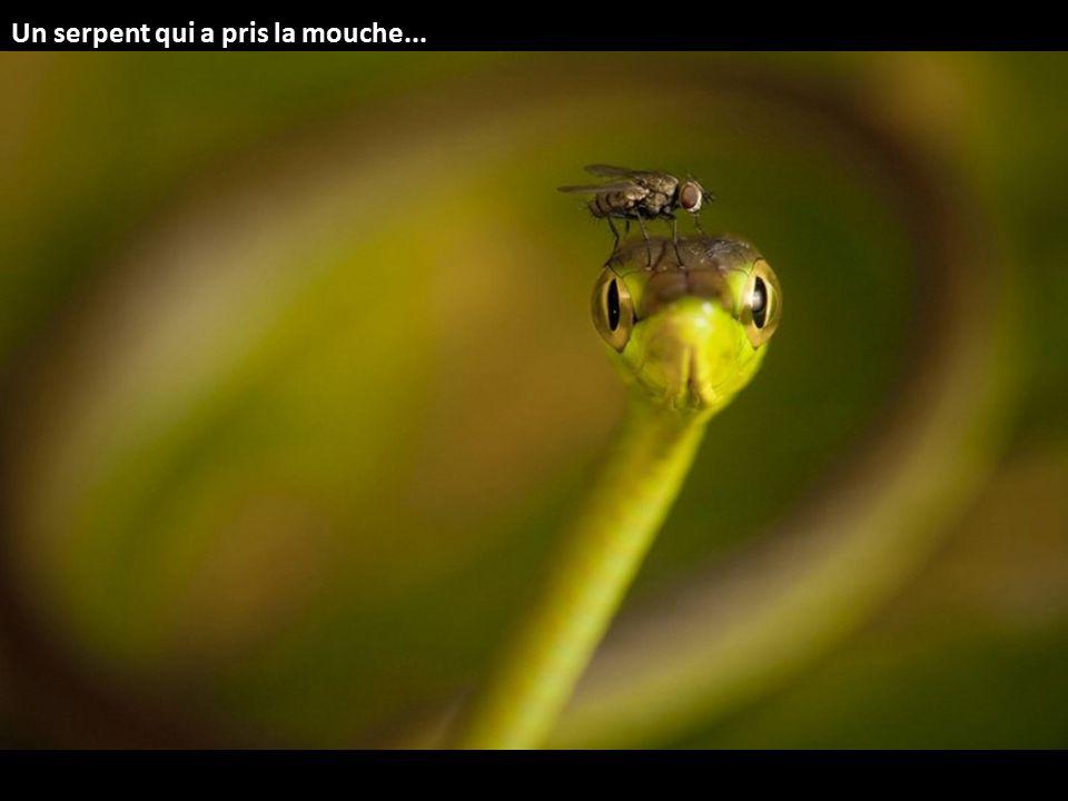 Un serpent qui a pris la mouche...