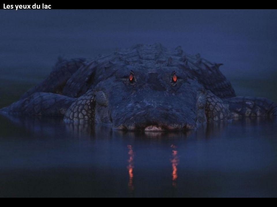 Les yeux du lac